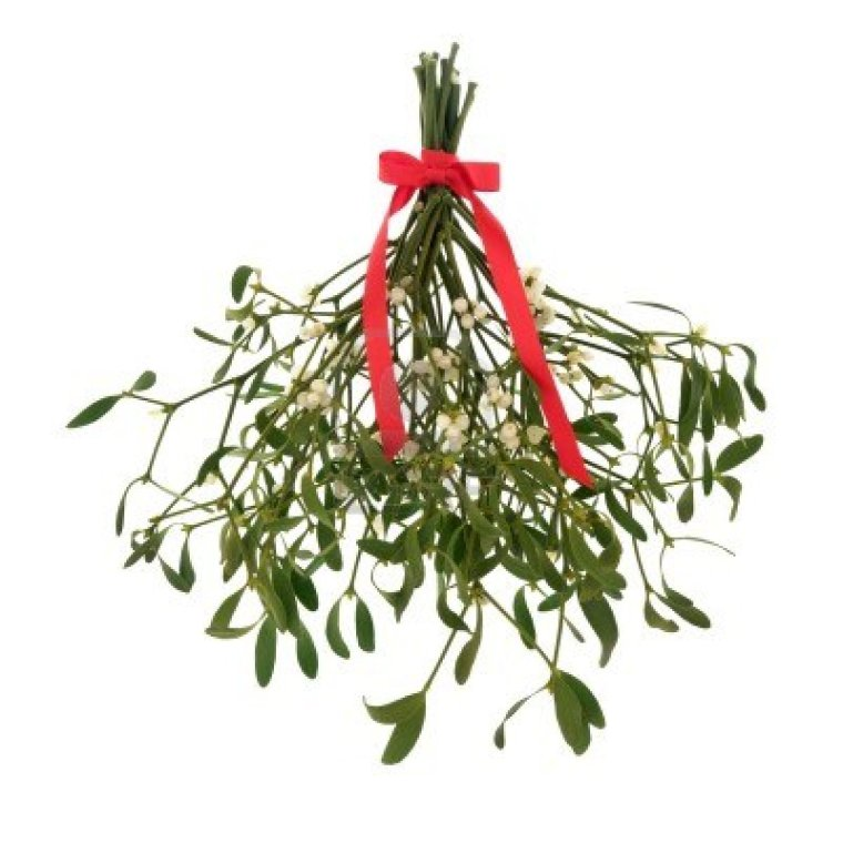 mistletoe-with-berries-and-tied-with-a-red-ribbon-with-bow-isolated-over-white-background